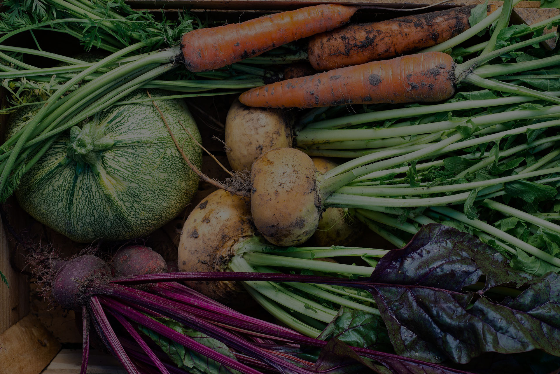 Closeup of freshly harvested vegetables (turnips, beetroots, carrots, round marrow), top view - Image