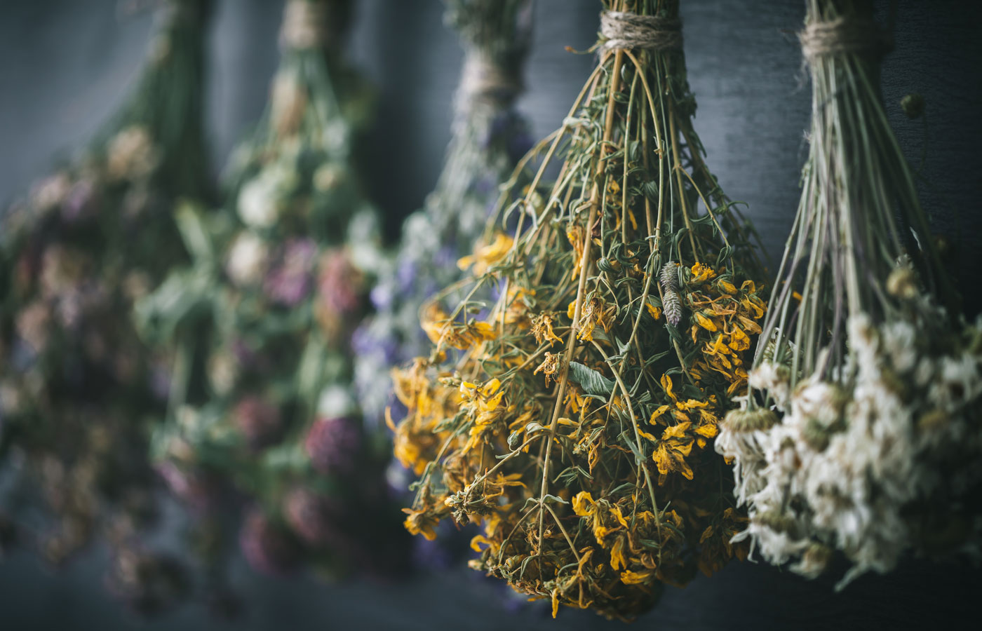 Hanging bunches of medicinal herbs and flowers, focus on hypericum flower St. Johns wort. Herbal medicine. Retro toned.
